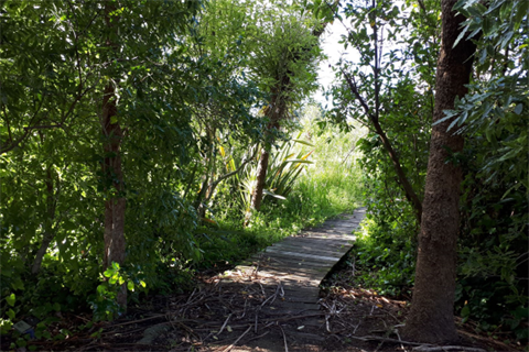 Te Awahou Board Walk - Walking path through the bush.